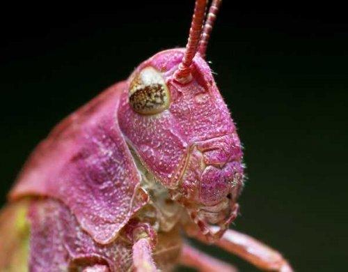 насекомые 003