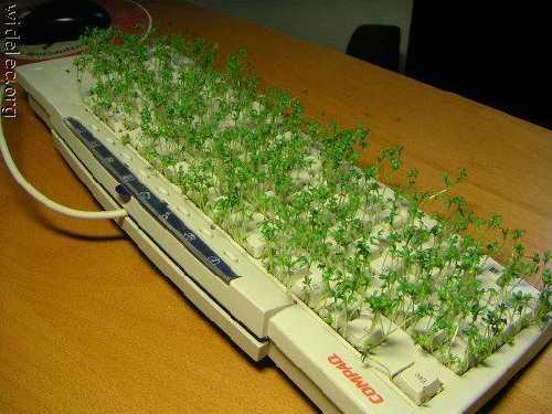 компьютеры 037
