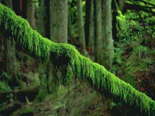 природа 028