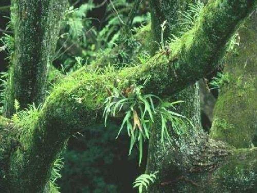 природа 035