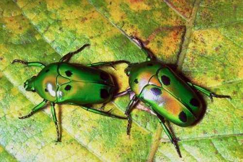 насекомые 075