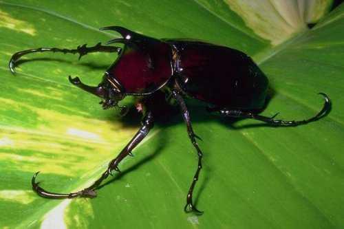 насекомые 079