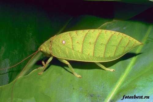насекомые 097