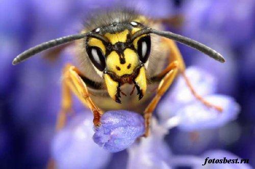 насекомые 110