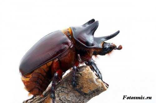 насекомые 115