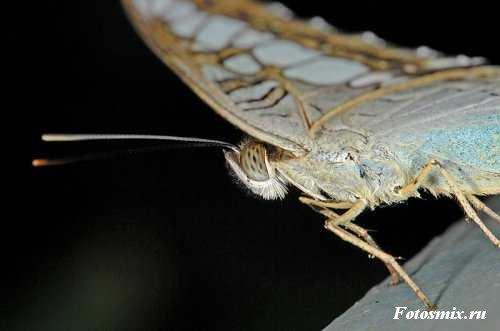 насекомые 116