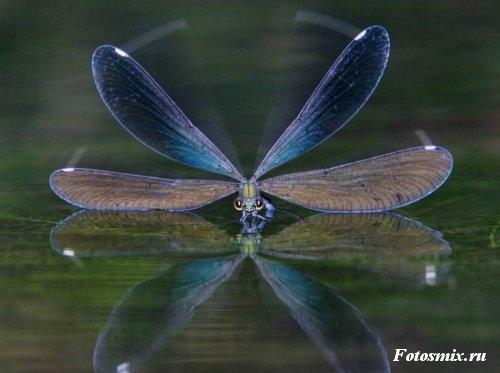 насекомые 117