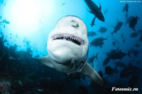 Под водой 001