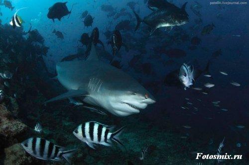 Под водой 002