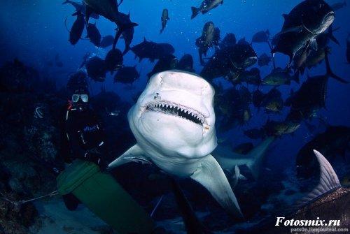 Под водой 004