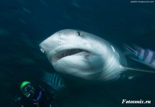 Под водой 009