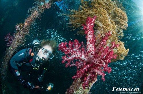 Под водой 011