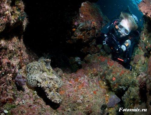 Под водой 018