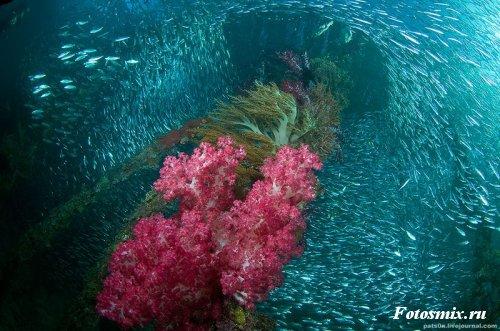 Под водой 019