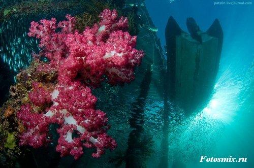 Под водой 023