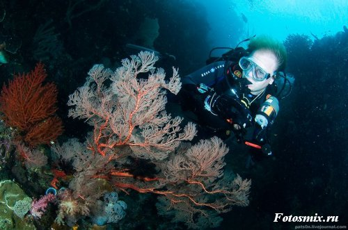 Под водой 024