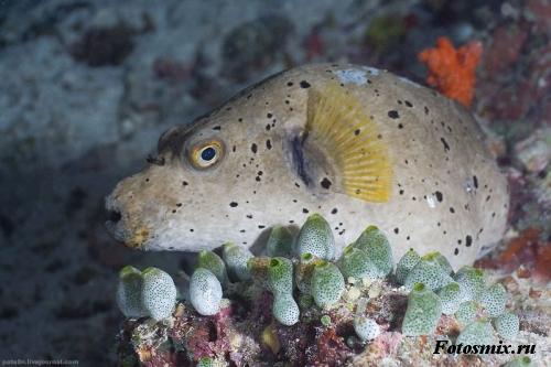 Под водой 025