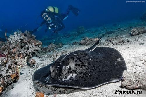 Под водой 026