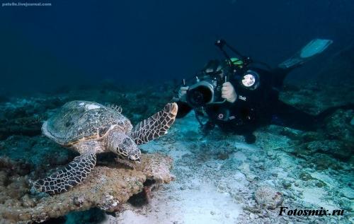 Под водой 027