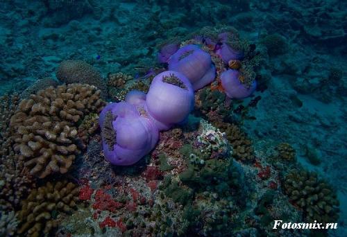 Под водой 029