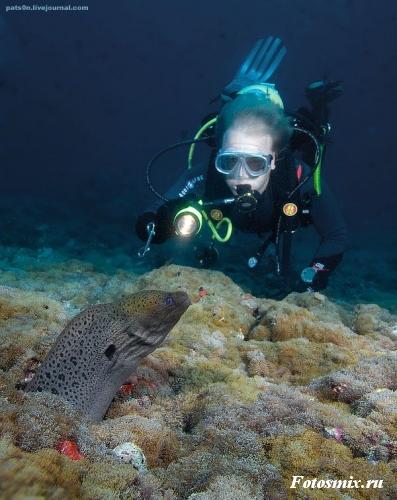 Под водой 028