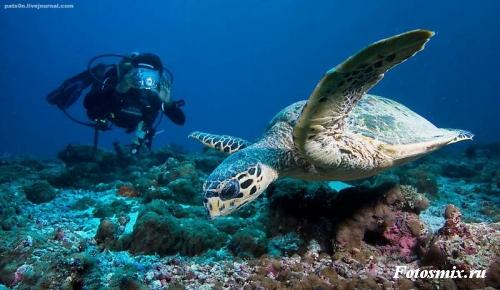 Под водой 030