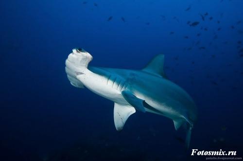 Под водой 033
